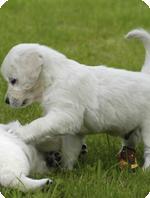 Pets Help Reduce Stress Level